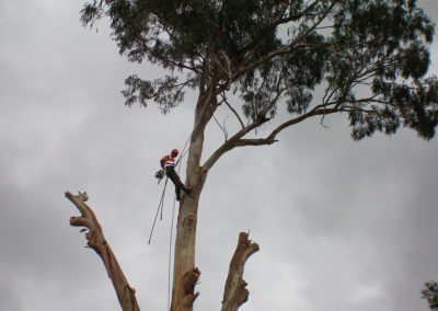 Large-Tree-Removal
