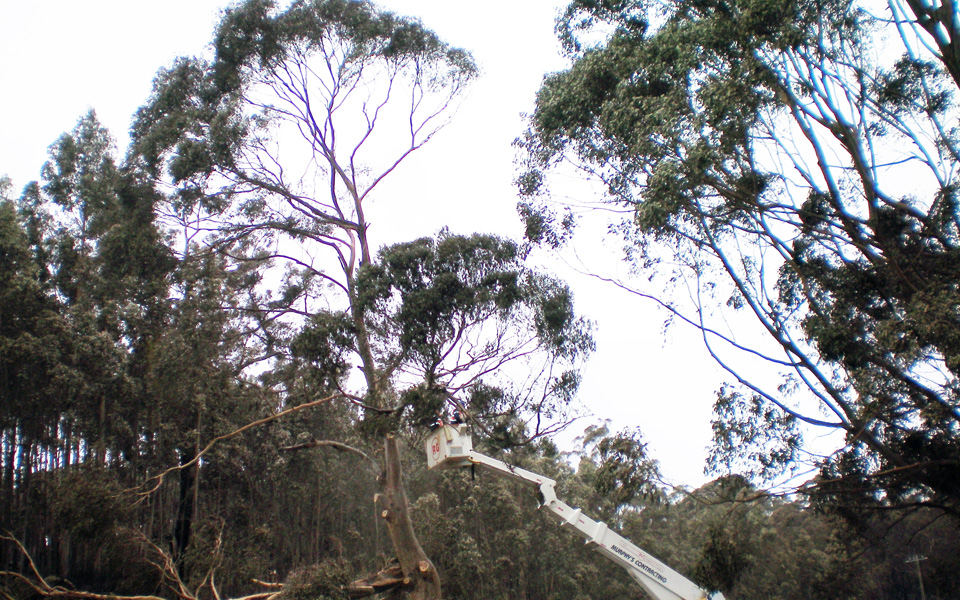 Large-Tree-Removals