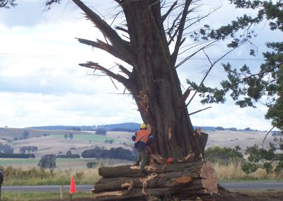 Large Tree Removals – South Gippsland