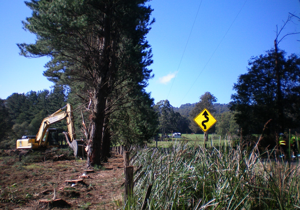 Hazardous-Tree-Removals-Gippsland