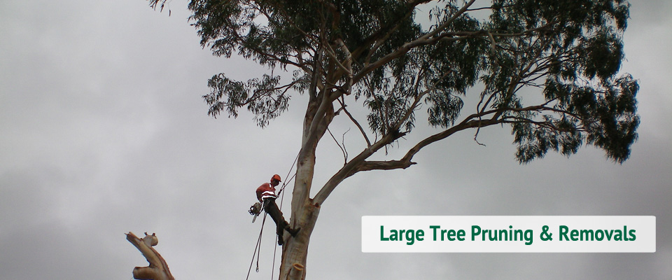 Large Tree-Pruning-Removals